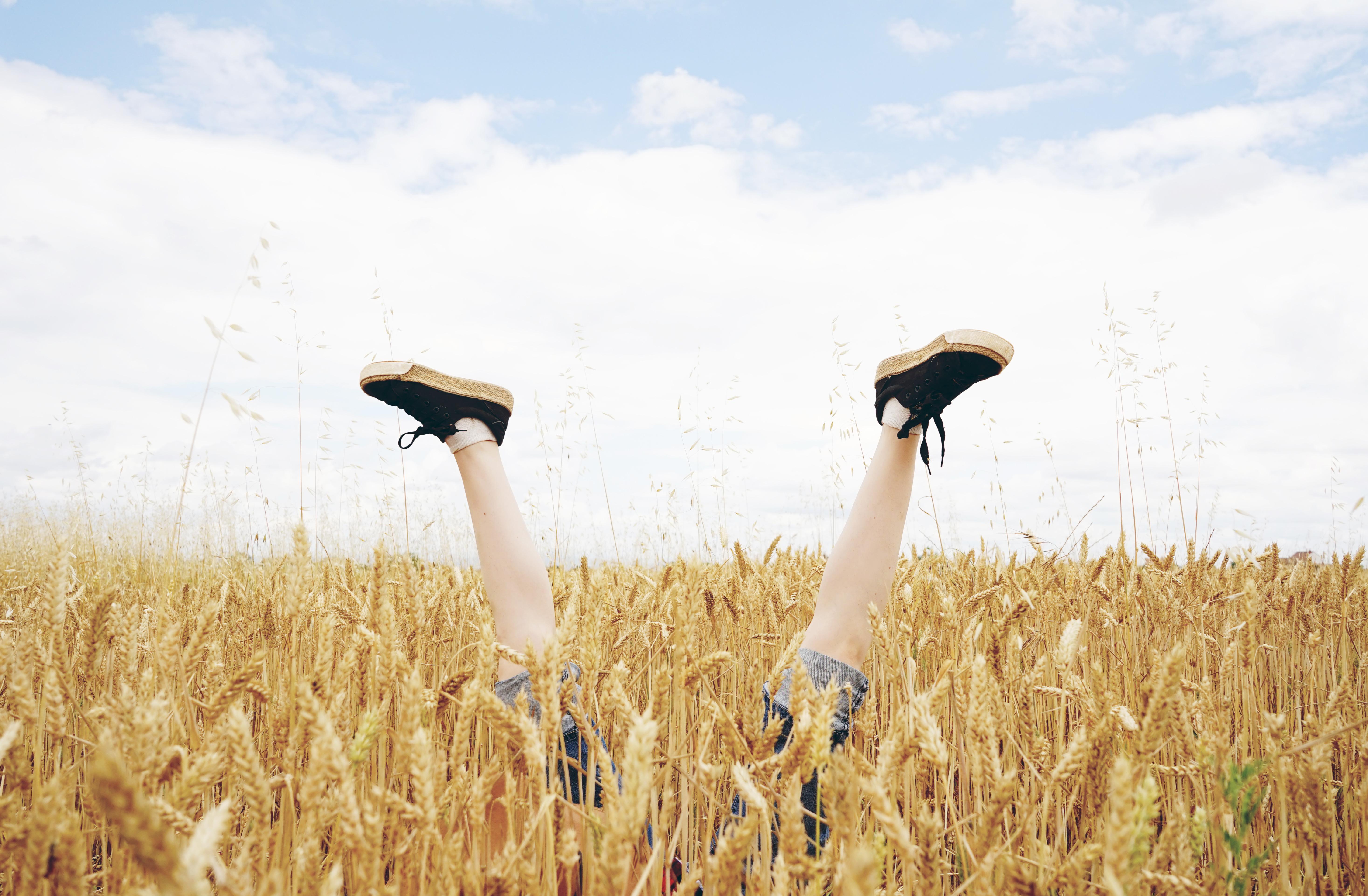 Piernas asomando por encima de un campo de trigo